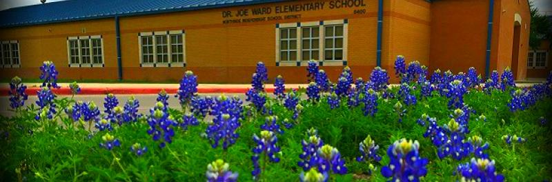 Campus photo behind a bed of fresh bluebonnets